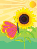 Sunflower butterfly sun Royalty Free Stock Photo