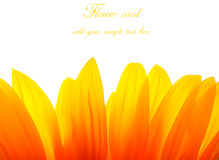 Sunflower card. Sunflower macro leaf card with spase for text Royalty Free Stock Images