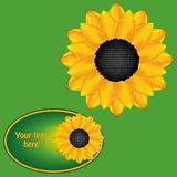 Sunflower card Royalty Free Stock Photography