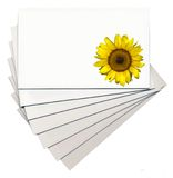 Sunflower on cards Stock Photography