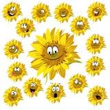 Sunflower cartoon. Isolated on white background vector illustration