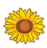 Sunflower cartoon Royalty Free Stock Photos