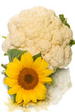 Sunflower and cauliflower Stock Image