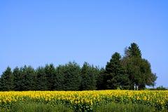 Sunflower City Stock Photo