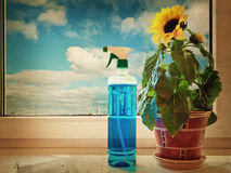 Sunflower. And Cleaning Fluid On The Windowsill Stock Photo