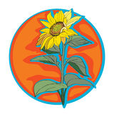 Sunflower clip art Royalty Free Stock Photography