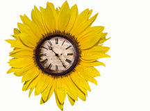 Sunflower with clock. Bright yellow sunflower with an antique clock Royalty Free Stock Photo