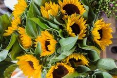 Sunflower close-up -  Helianthus. Yellow green Stock Image