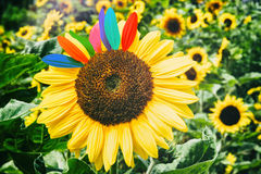Sunflower closeup. Fun & happiness concept Stock Photo