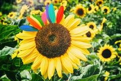 Sunflower closeup. Fun & happiness concept Stock Photo