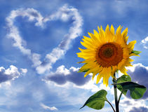 Sunflower and cloud heart. A background with a bright sunflower, on the backdrop of a sky having a heart shape made of clouds Royalty Free Stock Photography