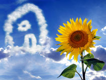 Sunflower and cloudscape. Blooming sunflower with background cloudscape in shape of house Royalty Free Stock Image