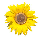 Sunflower-coins Stock Photos