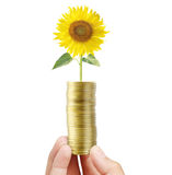 Sunflower and coins Stock Photography