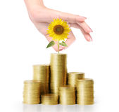 Sunflower and coins Stock Images