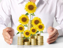 Sunflower and coins Money growth concept. Investments in stock market Royalty Free Stock Image