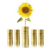 Sunflower and coins money growth Royalty Free Stock Photos