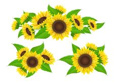 Sunflower collection for banner and bouquet Royalty Free Stock Image