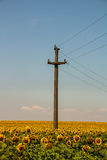 Sunflower and Comunication. Retro telecommunications post located in a sunflower field stock photography