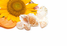 Sunflower and Conch royalty free stock photos