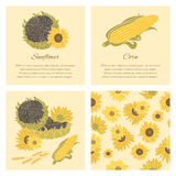Sunflower and corn  greeting card set on the bright background Stock Photography
