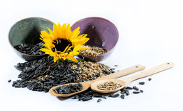 Sunflower, cups, wooden spoons and sunflower seeds Stock Photo
