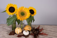 Sunflower decoration with pumpkins and leafs Stock Photo