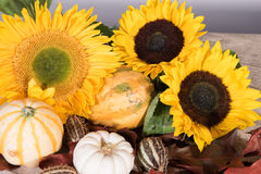Sunflower decoration with pumpkins and leafs Royalty Free Stock Images