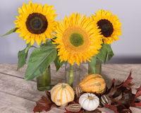 Sunflower decoration with pumpkins and leafs Royalty Free Stock Photos