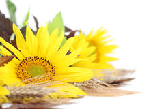 Sunflower decoration on white background Stock Photography