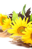 Sunflower decoration on white background Royalty Free Stock Image