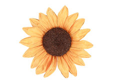 Sunflower for decoration on white background Stock Image