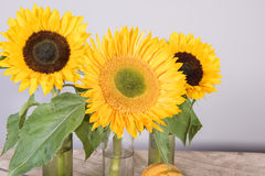 Sunflower decoration on wooden plate Stock Photography