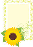 Sunflower in the decorative frame Royalty Free Stock Images