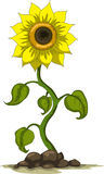 Sunflower  design Stock Photo