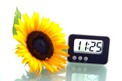 Sunflower and digital clock Royalty Free Stock Photography