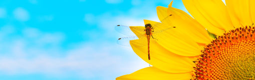 Sunflower dragonfly Stock Photography