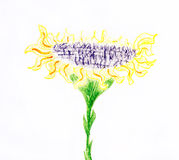 Sunflower drawing. Drawn sunflower on white background Royalty Free Stock Photos