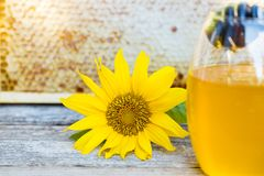 Sunflower and dripping honey in front of honeycomb royalty free stock photos