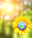 Sunflower and Earth on sunny background Royalty Free Stock Photo