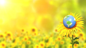 Sunflower and Earth on sunny background Royalty Free Stock Images