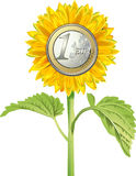 Sunflower with euro coin. Money object Stock Image