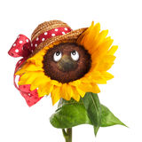 Sunflower Face Stock Image