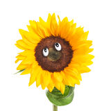 Sunflower Face Royalty Free Stock Photography