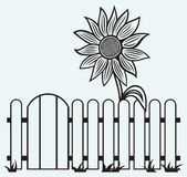 Sunflower and fence Stock Photo