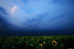 Sunflower field. Storm brewing above sunflower field at dusk Stock Photos