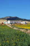 Sunflower field, Andalusia, Spain. Royalty Free Stock Photography