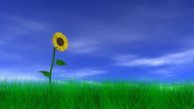 Sunflower in the Field vector illustration