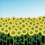 Sunflower Field illustration Stock Photo