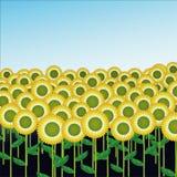 Sunflower Field illustration. Illustration of Sunflower field under blue sky Stock Photo